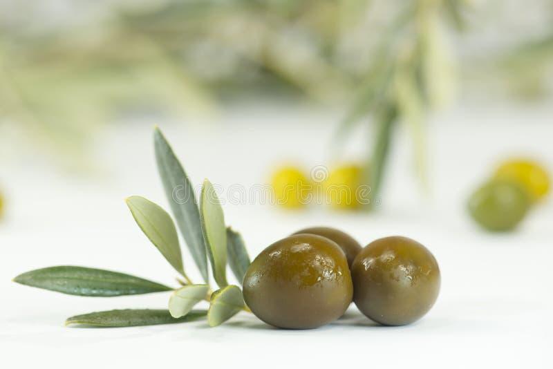Nya oliv arkivbilder