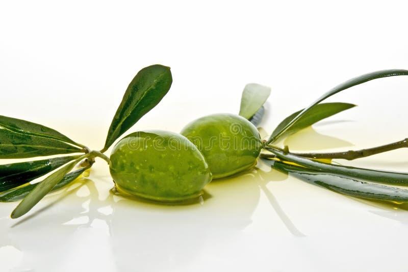 nya olivgrön mycket royaltyfri fotografi