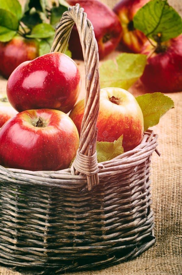 Nya organiska äpplen royaltyfria foton