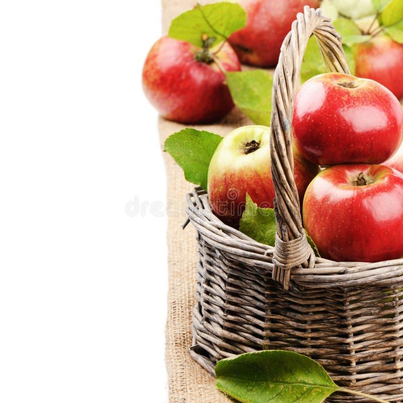 Nya organiska äpplen i vide- korg arkivbilder