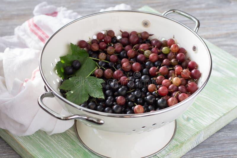 Nya organiska bär svart vinbär och krusbär i en durkslag royaltyfri fotografi
