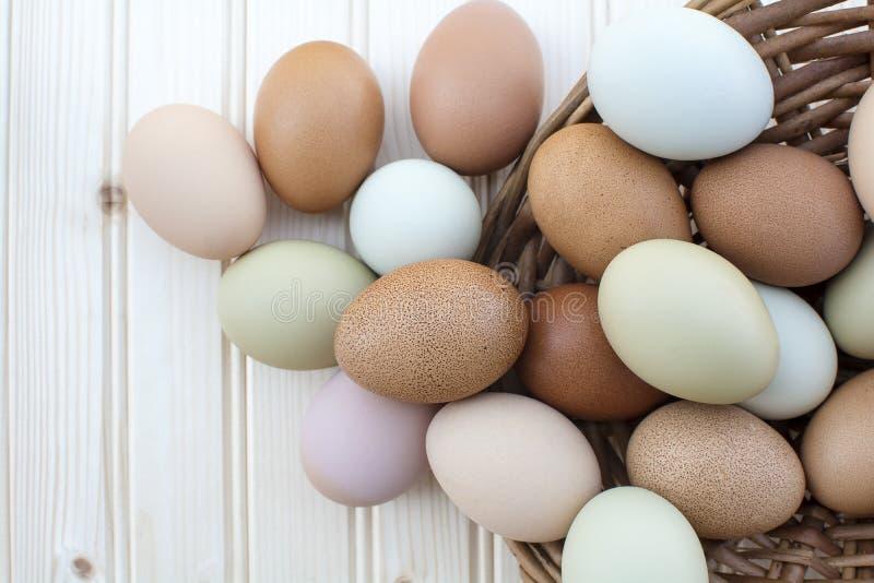 Nya organiska chickeneggs flödar över ut ur korg på träbackg royaltyfria bilder
