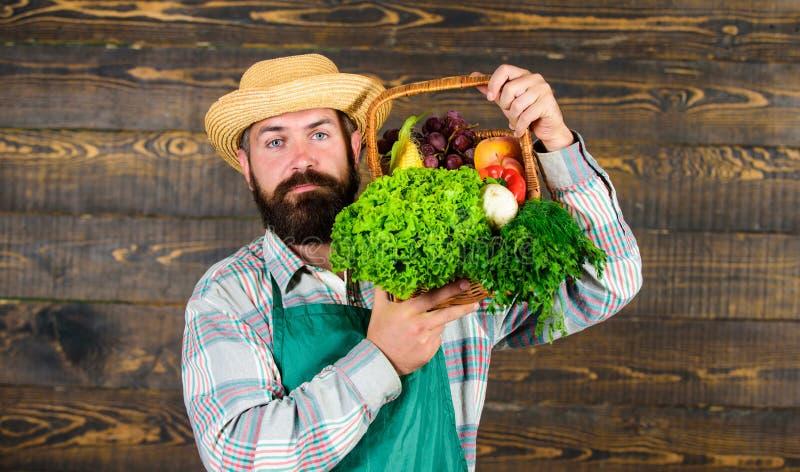 Nya organiska grönsaker i vide- korg Man den skäggiga bonden som framlägger ecogrönsakträbakgrund Bondesugrör royaltyfri foto