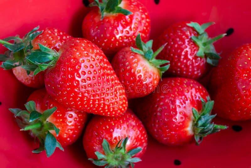 Nya organiska jordgubbar i röd bunkebakgrund arkivfoto
