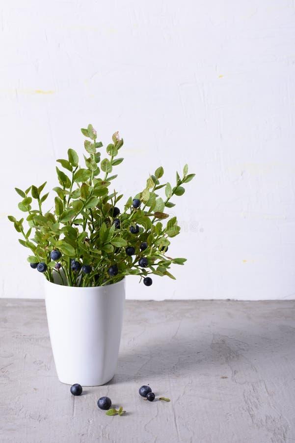 Nya organiska lösa bär, skogblåbärbuske i den vita koppen Kopieringsutrymme, slut upp fotografering för bildbyråer