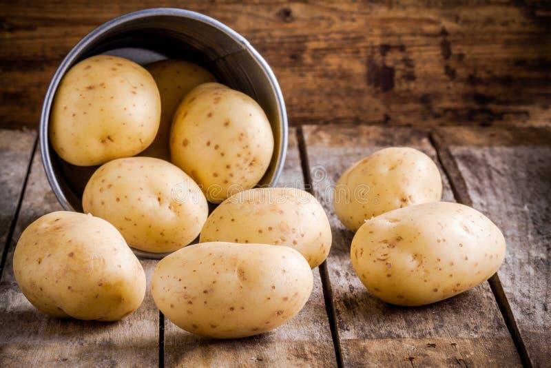 Nya organiska rå potatisar i en hink royaltyfri bild