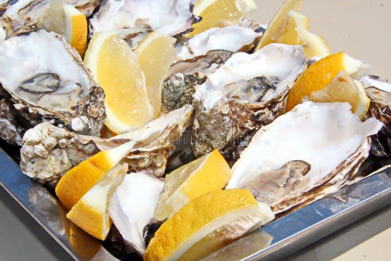 Nya ostron med citronen som ligger på ett uppläggningsfat och en platta som läckerheter royaltyfria foton