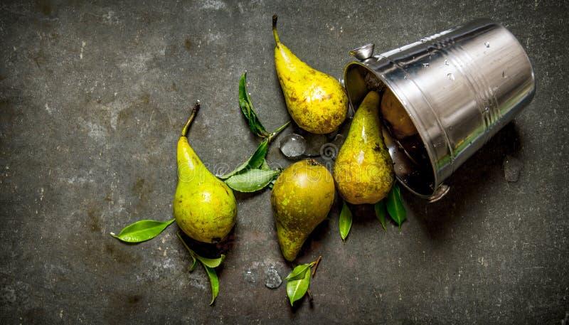 Nya päron med sidor i en metall ösregnar royaltyfria foton