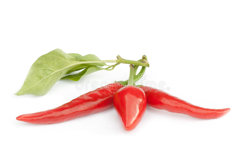 nya peppar för chili royaltyfri bild