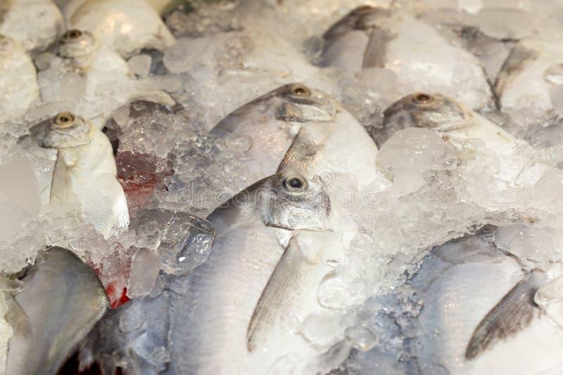 Nya pomfret fiskar i isbehållare på den havs- marknaden arkivbild