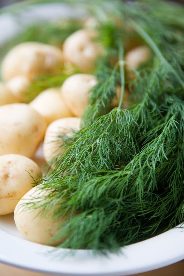 Nya Potatisar För Dill Royaltyfria Foton