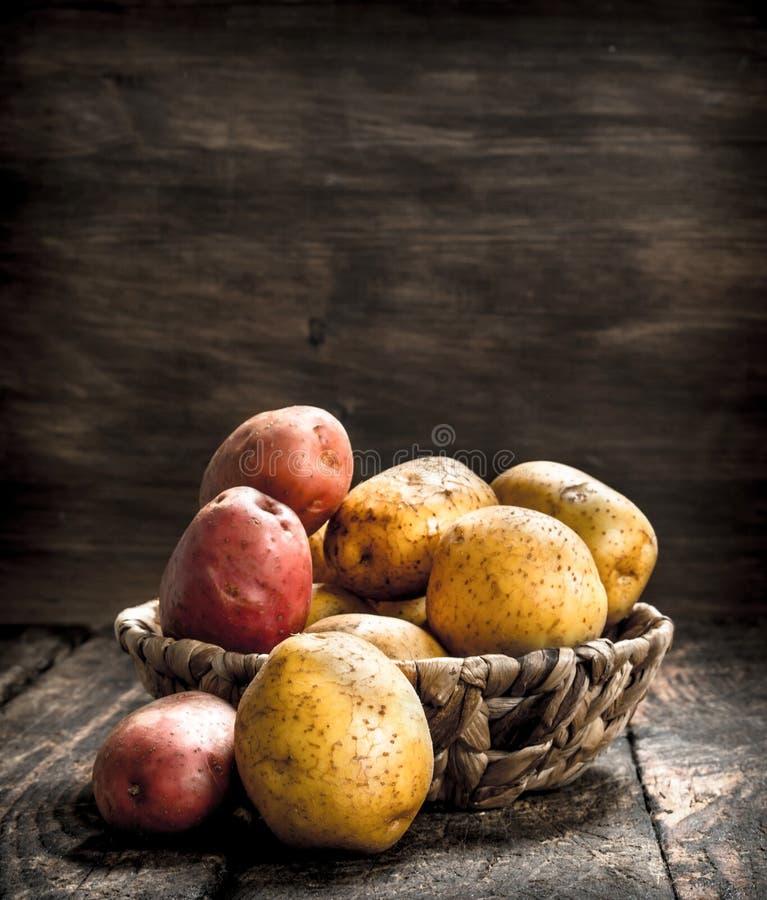 nya potatisar för korg arkivbild