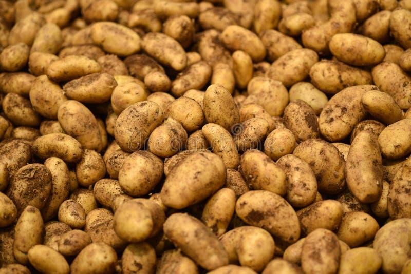 Nya nya potatisar för matgrönsaker, bakgrund Potatisar mönstrar till salu i marknad Jordbruk och grönsakprodukt fotografering för bildbyråer
