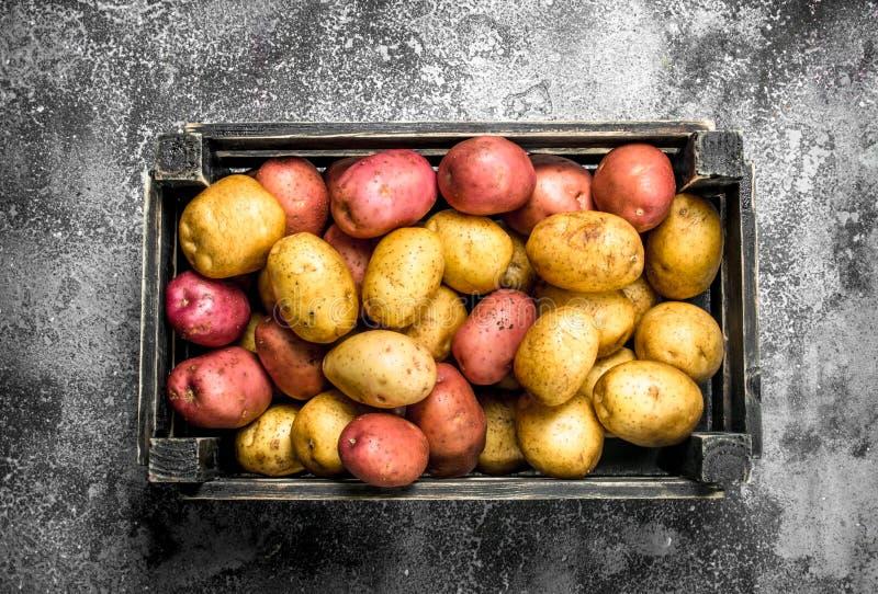 Nya potatisar i en ask royaltyfri fotografi
