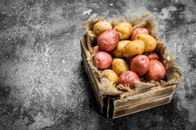 Nya potatisar i en ask royaltyfri foto