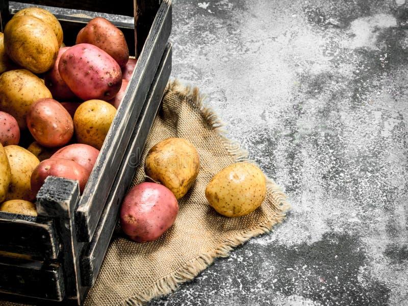 Nya potatisar i en ask arkivbild