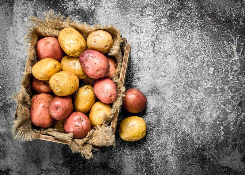 Nya potatisar i en ask fotografering för bildbyråer