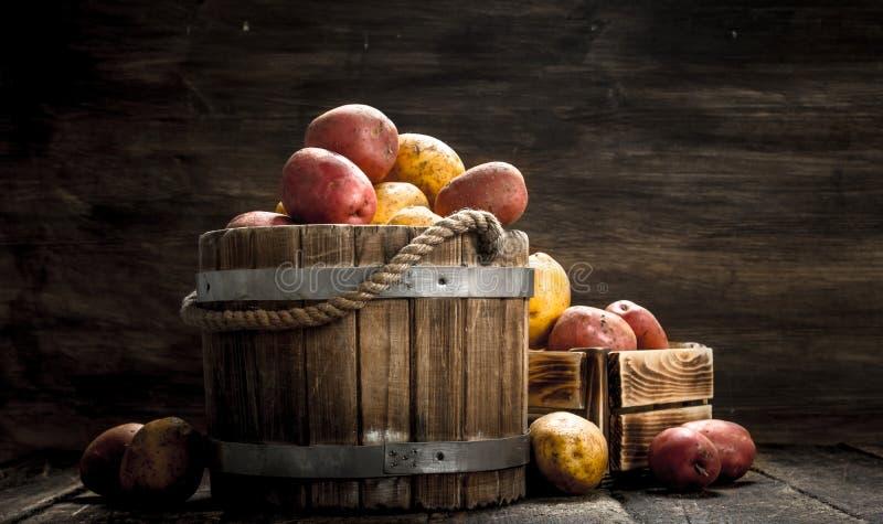 Nya potatisar i en trähink arkivbilder