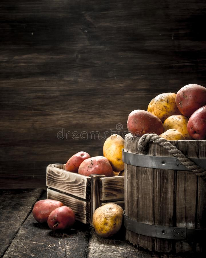 Nya potatisar i en trähink royaltyfria bilder