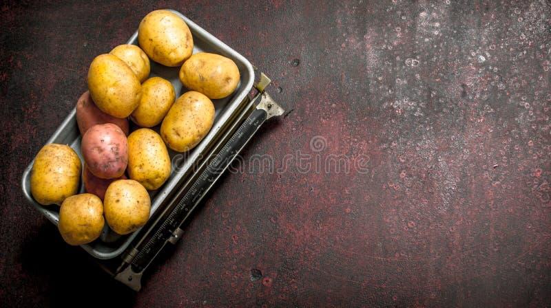 nya potatisar på vågen arkivbilder
