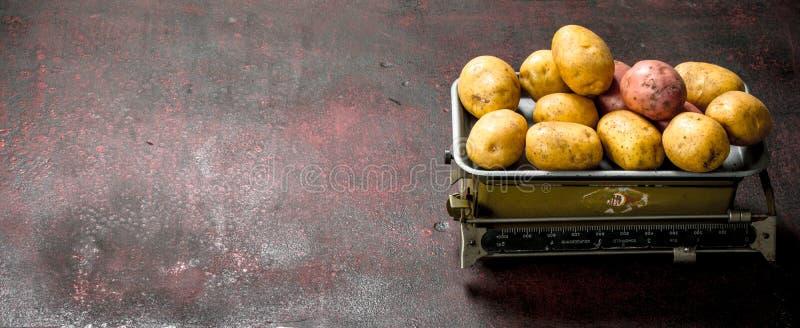 nya potatisar på vågen arkivfoto