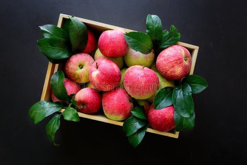 Nya röda äpplen i träasken på svart bakgrund arkivbilder