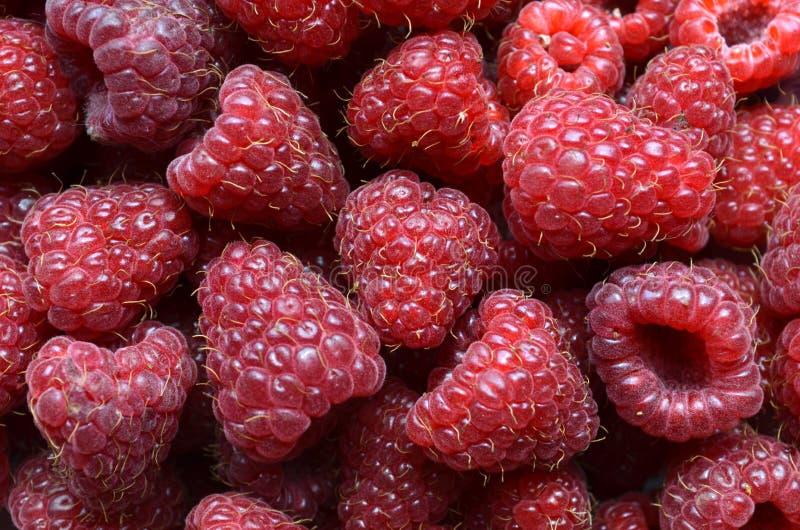 Nya röda bärfrukter royaltyfria foton