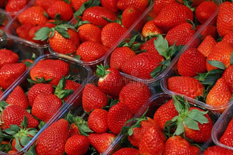 Nya röda mogna jordgubbar i plast- askar royaltyfri bild