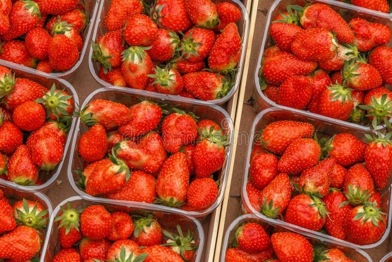 Nya röda mogna jordgubbar i plast- askar royaltyfri fotografi