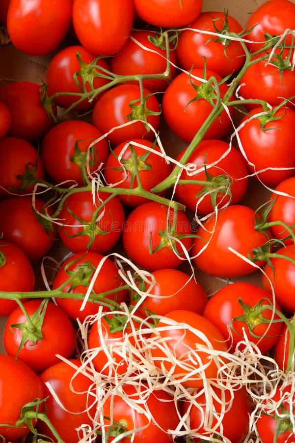 nya röda tomater arkivbilder