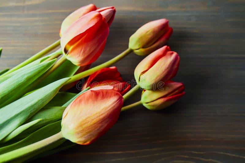Nya röda tulpan för ferien royaltyfria foton