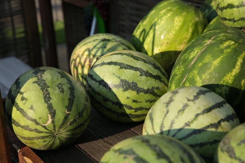 nya randiga vattenmelon på skärm på marknaden royaltyfri bild