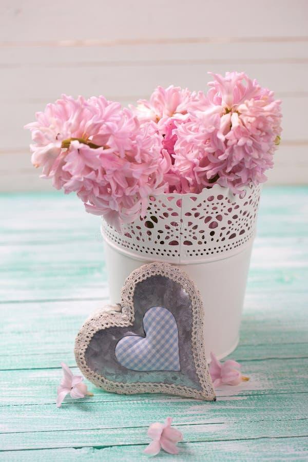 Nya rosa hyacinter blommar i hink och dekorativ hjärta på arkivfoto
