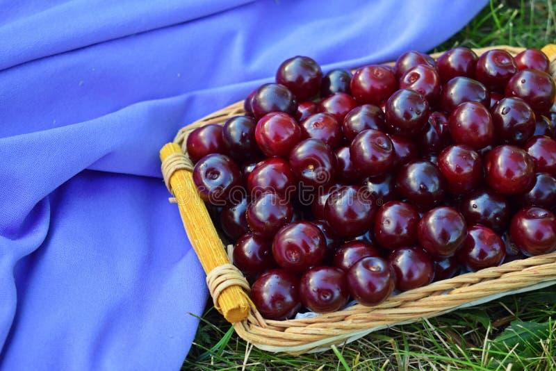 Nya söta körsbärsröda bär royaltyfria bilder