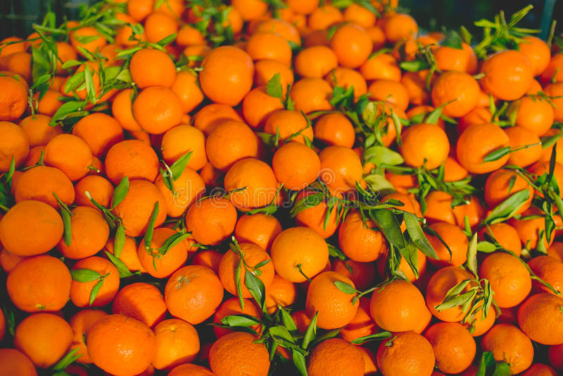 nya saftiga apelsiner royaltyfria bilder