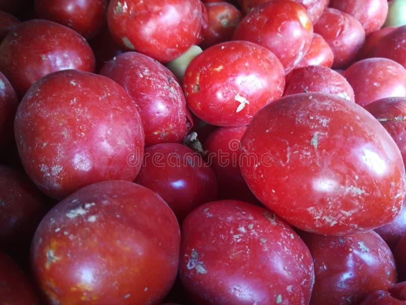 Nya samlade tomater arkivbild