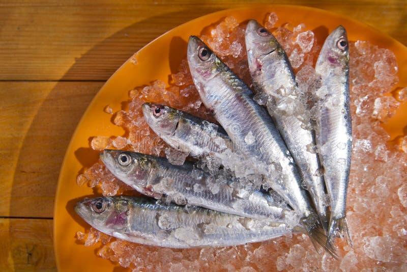 nya sardines royaltyfri bild
