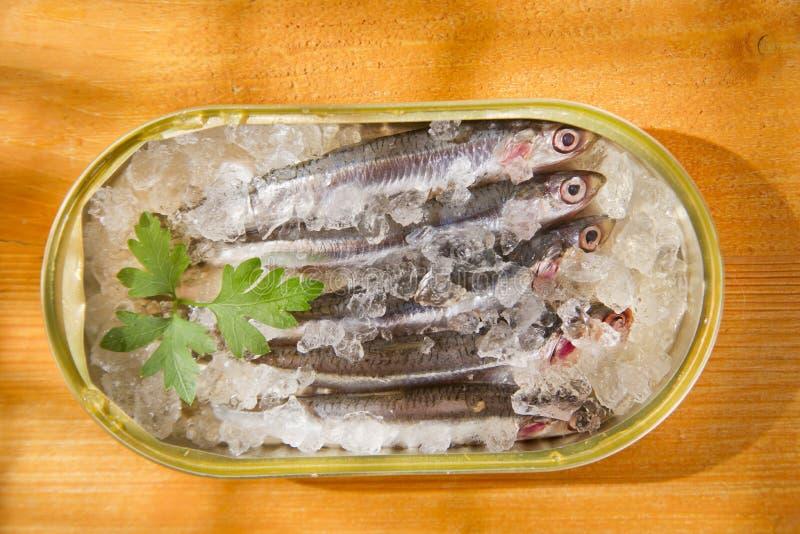 nya sardines fotografering för bildbyråer