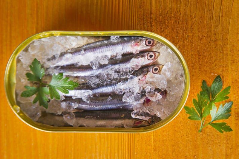 nya sardines royaltyfria foton