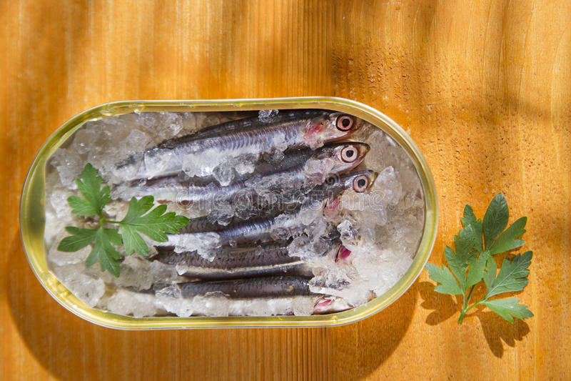 nya sardines royaltyfria bilder