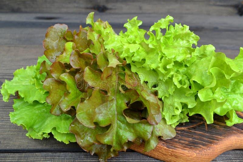 Nya sidor av salade: grön isbergsallad, grönsallatoakleaf, batavia blandade arkivfoto