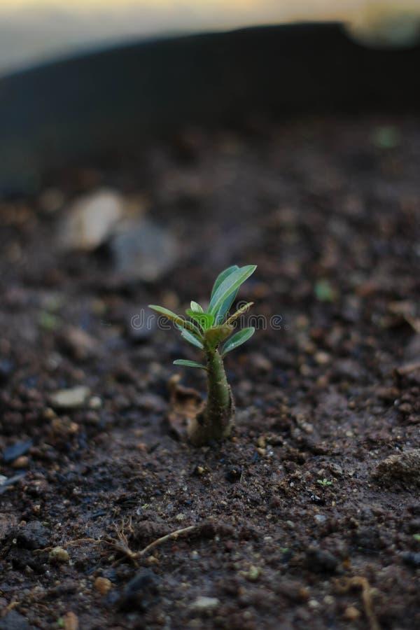 Nya små träd växer arkivfoton