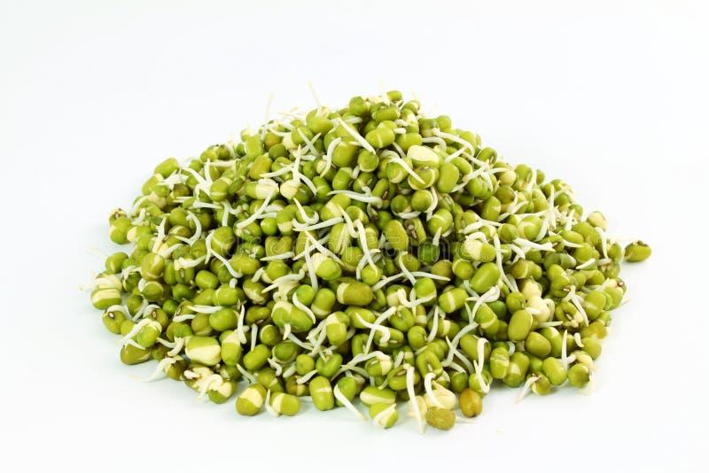 Nya spirade mung bönor eller bönor för grönt gram i vit bakgrund arkivfoton