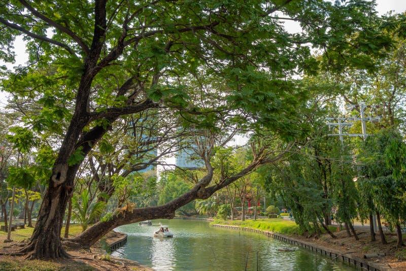 Nya stora gröna träd bredvid kanalen parkerar in royaltyfri bild