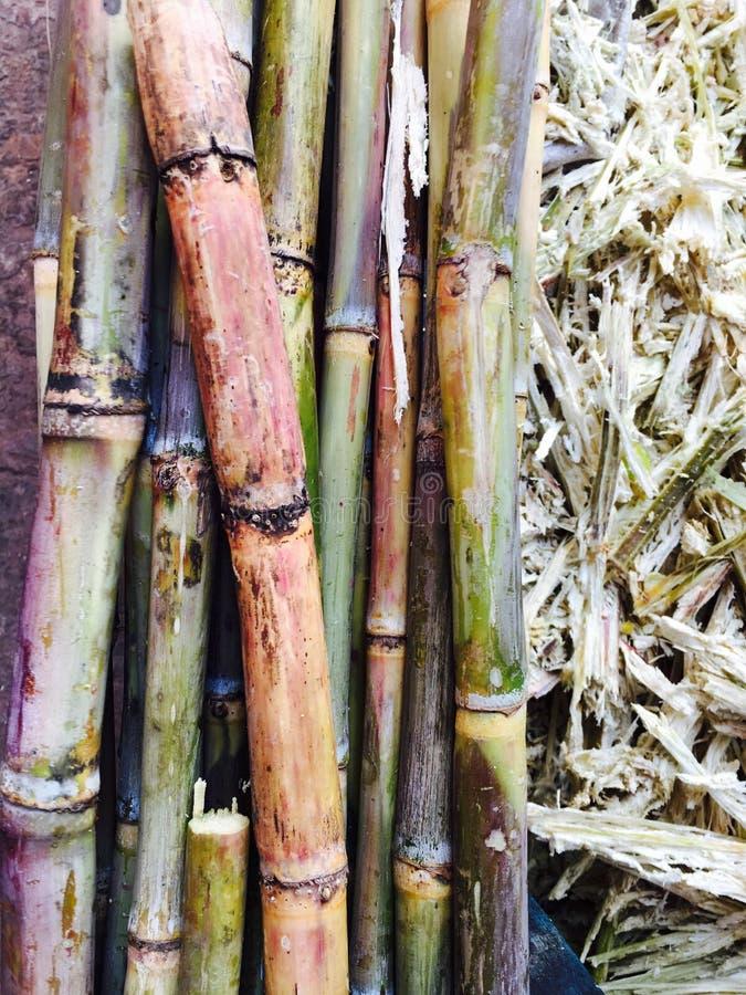 Nya Sugar Cane arkivfoto