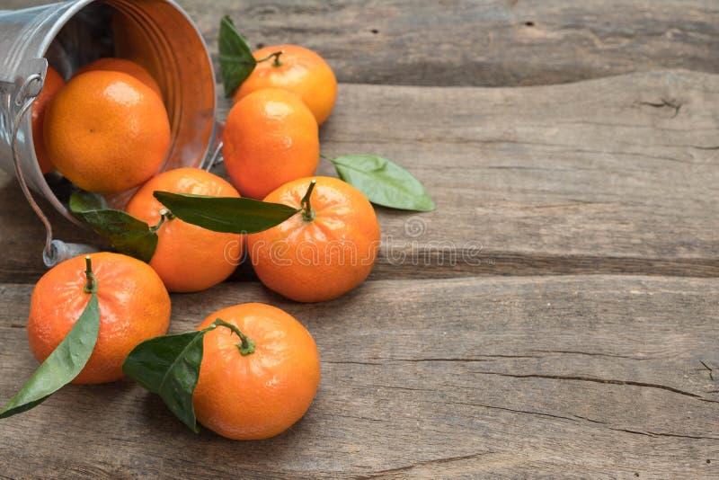 Nya tangerin med bladet royaltyfri fotografi