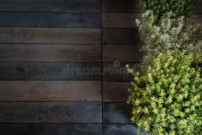 Nya timjanörter på lantligt trä fotografering för bildbyråer