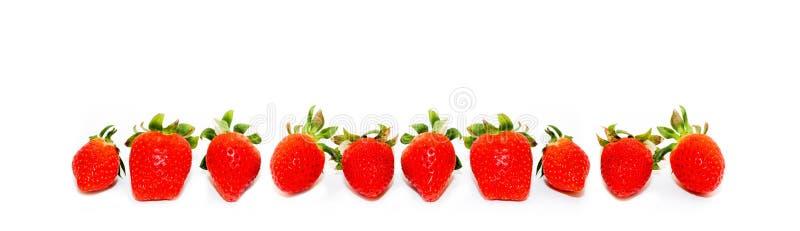 Nya tio och naturliga röda jordgubbar som isoleras på en sömlös bred panoramaram, formaterar vit bakgrund arkivfoton