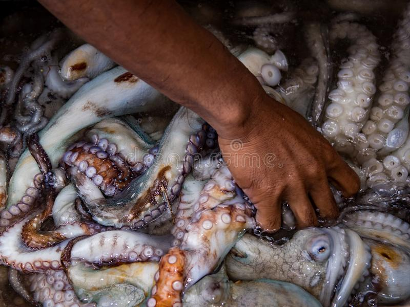 Nya tioarmade bläckfiskar från havet fotografering för bildbyråer