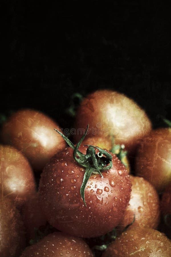 Download Nya tomater fotografering för bildbyråer. Bild av refreshment - 37346953